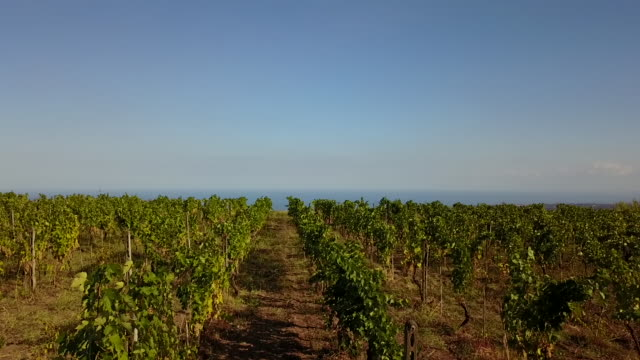 vídeos de stock e filmes b-roll de the beautiful view of barone di villagrande near mt.etna in sicily, italy - vinha