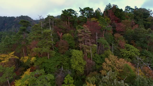 the beauty of autumn - satoyama scenery stock videos & royalty-free footage