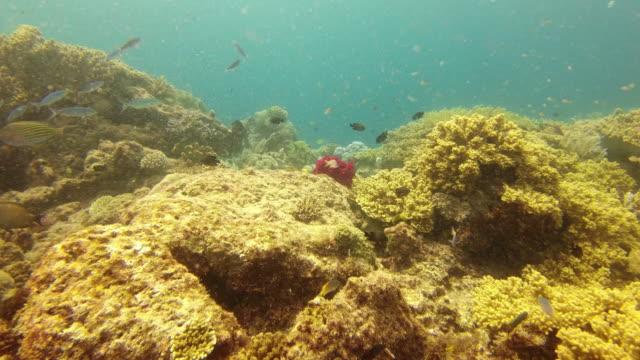 サンゴ礁の美しさは戦う価値がある - ソフトコーラル点の映像素材/bロール