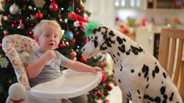 the best of friends - dalmatian dog stock videos and b-roll footage
