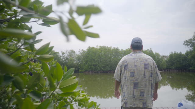 the big young man walk through mangrove forest