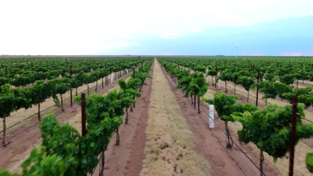 The biggest vineyard in Texas