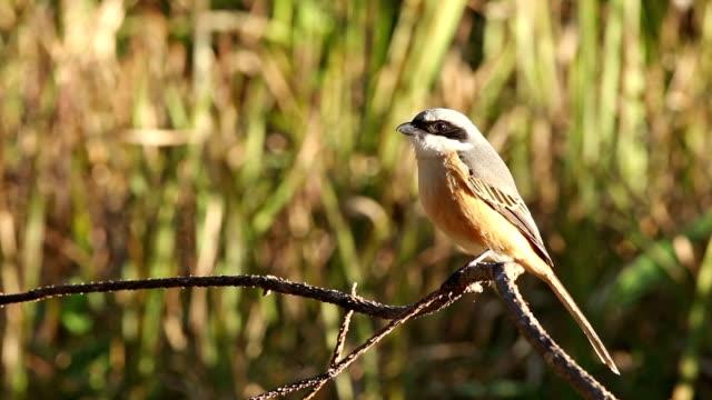 the bird in thailand.