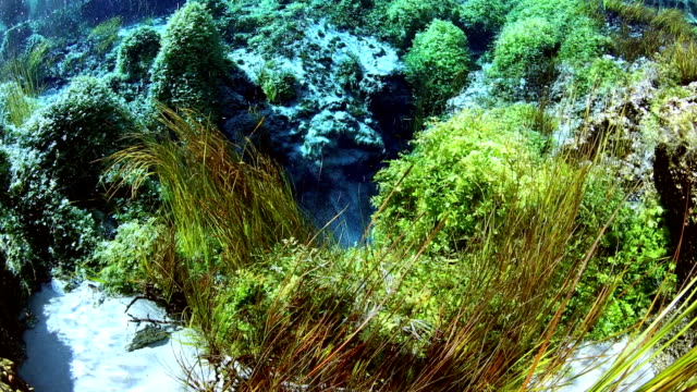 the birthplace of water - algae stock videos & royalty-free footage