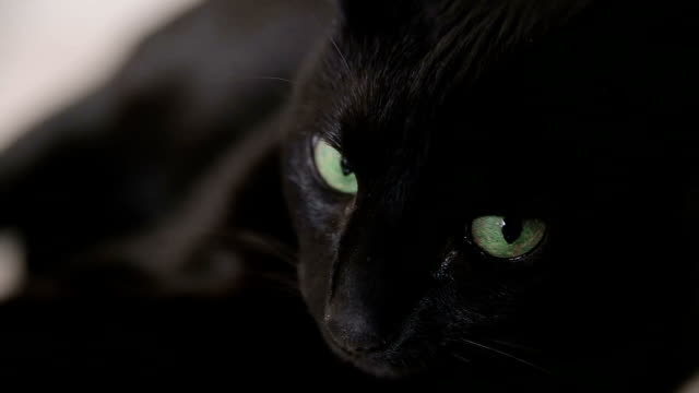the black cat with green eyes lies on a sofa. - claw stock videos and b-roll footage
