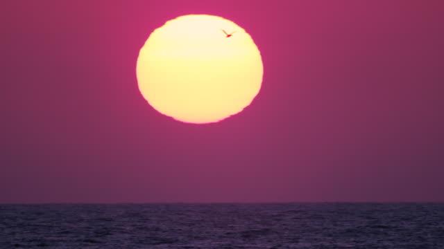The blazing golden sun setting over the ocean off the Santa Monica coast as a solo bird flies through the frame
