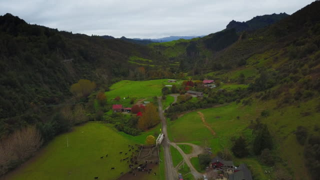 the blue duck station in the whanganui national park is a working sheep and cattle ranch that provides tourists with hands on conservation experience. - ngauruhoe stock videos & royalty-free footage