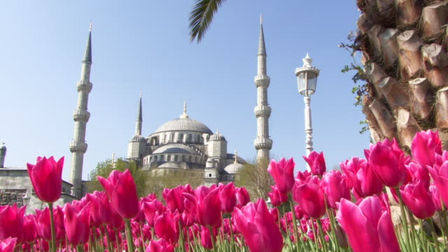 ws pan the blue mosque, istanbul, turkey - tulpe stock-videos und b-roll-filmmaterial