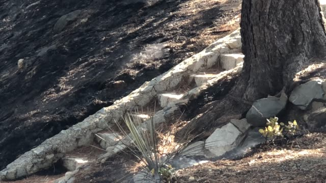 the bobcat fire burns in the angeles national forest on september 23 near pasadena, california. the bobcat fire, burning in the san gabriel... - pasadena kalifornien stock-videos und b-roll-filmmaterial