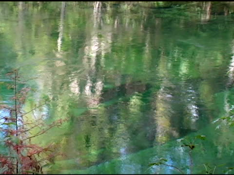 """the """"boil"""" of a natural spring - aquifer stock videos & royalty-free footage"""