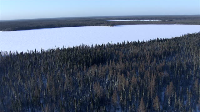 the boreal forest surrounds a frozen lake. available in hd. - boreal forest stock videos & royalty-free footage