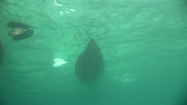 the bottom of a boat glides just below the surface of the water. available in hd. - remo video stock e b–roll