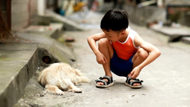 the boy and the dog - hutong alley stock videos & royalty-free footage