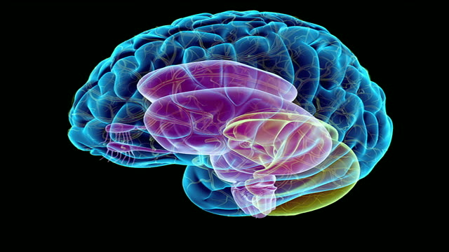 the brainstem - brain stem stock videos & royalty-free footage