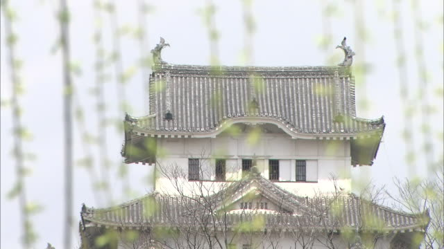 the branches of a weeping willow wave in front of himeji castle. - trauerweide stock-videos und b-roll-filmmaterial