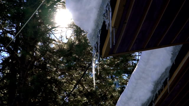 the bright sun shines on the large icicles on the background of pine forest - roof stock videos & royalty-free footage