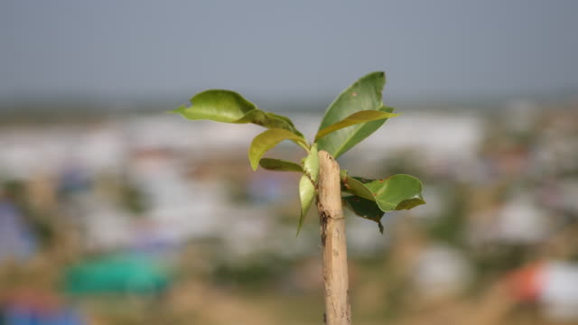 the bud of a plant can be seen in the foreground, in the background huts in the refugee camp of the rohingya people near cox's bazar in bangladesh in... - united nations stock videos & royalty-free footage