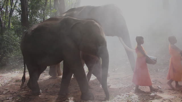 the buddhist monk and novice monk walking alms with elephants - safari india stock videos and b-roll footage