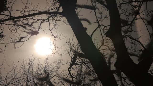 The Burning Sun