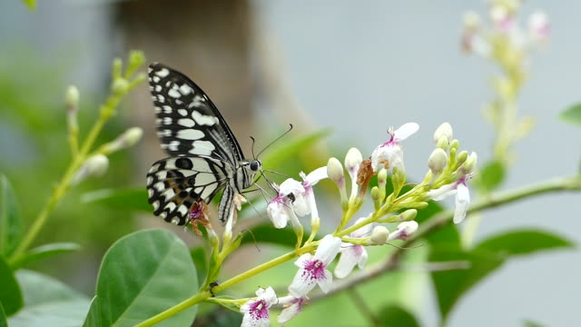 slo mo the butterfly - moth stock videos & royalty-free footage
