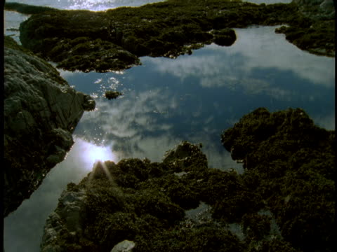 the calm waters of a tide pool reflect passing clouds. - gezeitentümpel stock-videos und b-roll-filmmaterial
