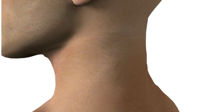 The camera pans from left to right past a male head and shoulders.  The camera then zooms into the neck area which dissolves revealing the spine and a throat cross-section.  A tracheotomy tube then ap