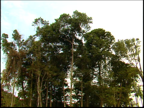 the camera tilts down from trees to a wide shot of an amazon gold mine - roraima state stock videos and b-roll footage