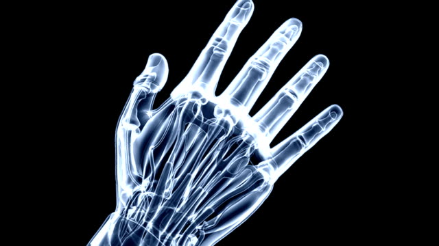The camera zooms in on a dorsal view of the right hand as it is rotating.  The hand is presented in an x-ray style view with the tendons and skeletal system visible.