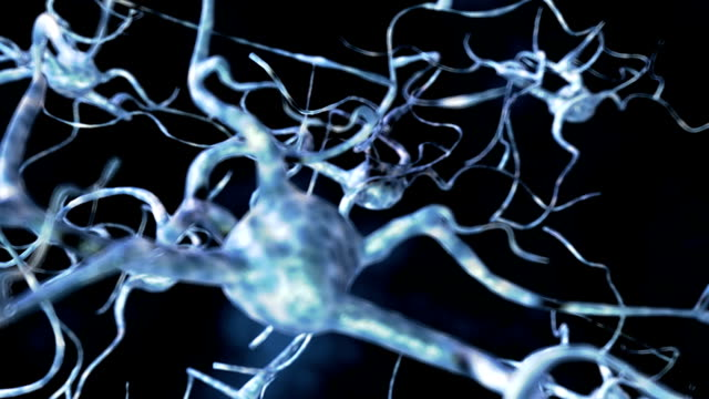 the camera zooms in on a group of neurons passing close to the nerve cell body of another neuron. - dendrite stock videos and b-roll footage