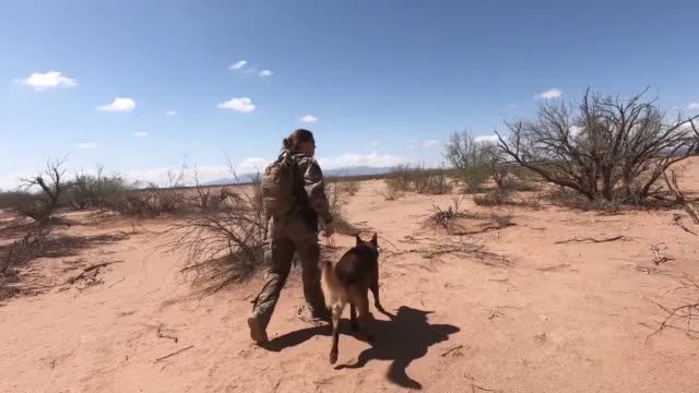 The canine team with Tucson Border Patrol Search Trauma and Rescue Unit patrol Tucson's remote desert for injured or stranded migrants