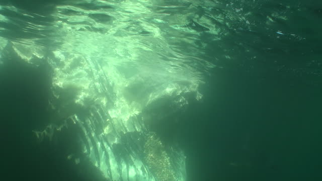 the carcass of a humpback whale floats at the surface of the ocean. - dead animal stock videos & royalty-free footage
