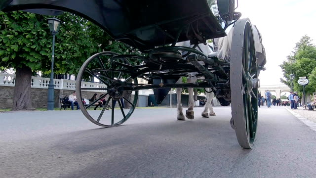the carriage rides through the park in vienna. austria. - two animals stock videos & royalty-free footage