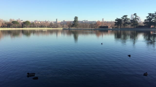 the casa de campo lake in madrid opens to the public in madrid on january 14 2019 in madrid spain - campo stock videos & royalty-free footage
