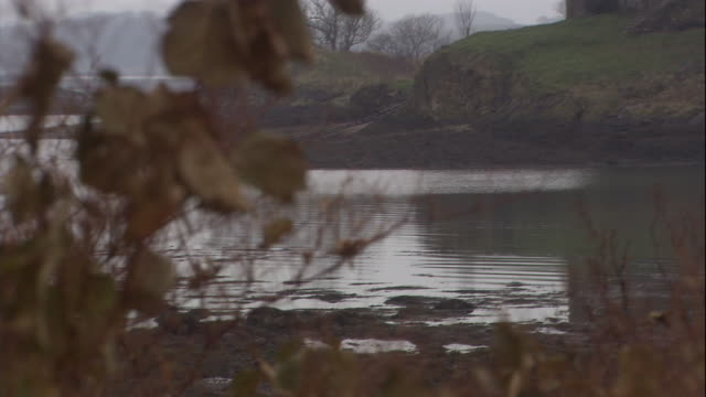 the castle stalker overlooks a mossy field and moat. - moat stock videos & royalty-free footage