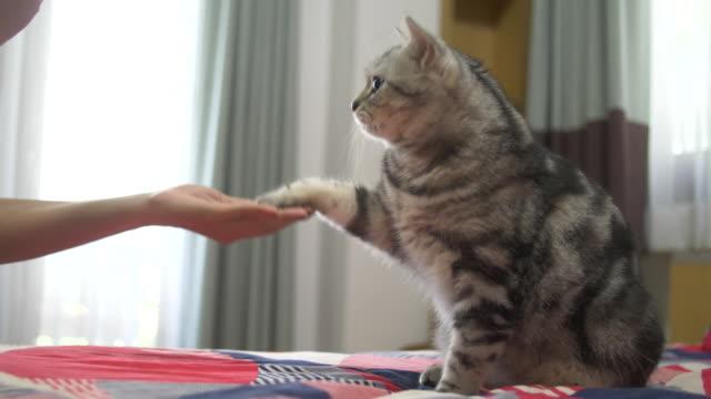 die katze knöchel tippt ihr frau im bett. - füttern stock-videos und b-roll-filmmaterial