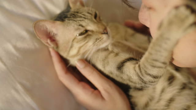the cat hugging her woman on white bed in bedroom. - part of a series stock videos & royalty-free footage