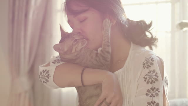 the cat hugging her woman. - affectionate stock videos & royalty-free footage