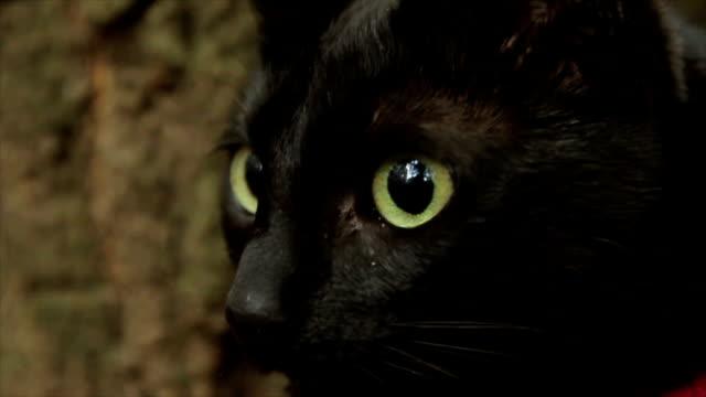 vidéos et rushes de le chat est toujours prudent - type de chasse
