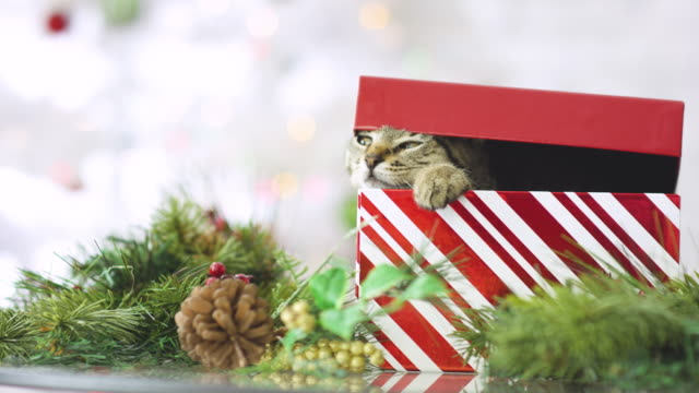 the cat is out of the box - hugging tree stock videos and b-roll footage