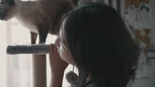 Die Katze, die auf einem Katzenhaus spielt.