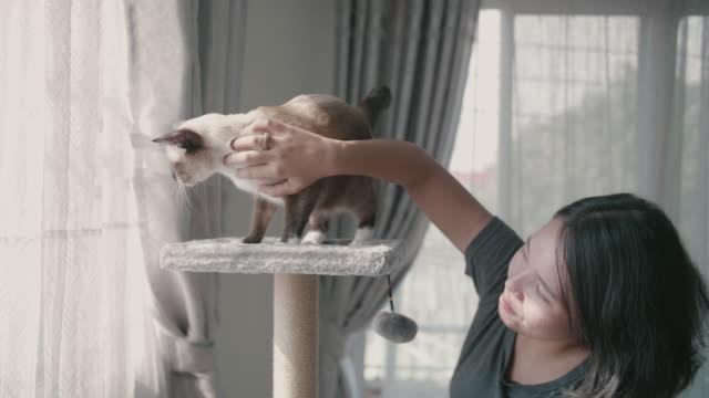 Die Katze spielt mit der asiatischen jungen Frau auf dem Katzenturm.