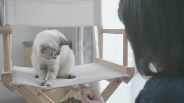 Die Katze spielt mit jungen Frau Hand.