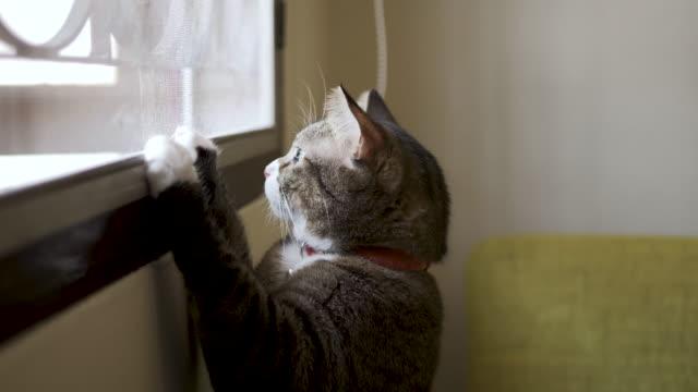 vidéos et rushes de le chat détendu et regardé les scènes lointaines sur le canapé de bureau. - rester à la maison expression