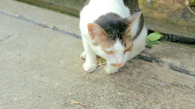die cat - schnurrhaar stock-videos und b-roll-filmmaterial