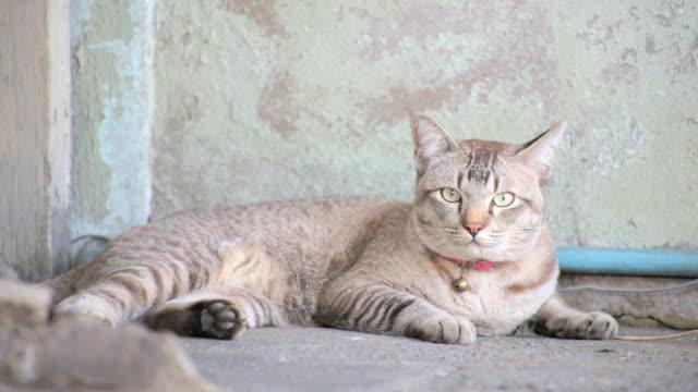 vídeos y material grabado en eventos de stock de la cat - vibrisas