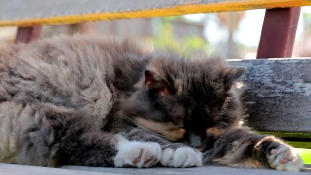 猫は自分自身を洗います。 - 雑種のネコ点の映像素材/bロール