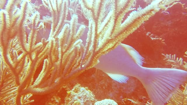 the cayman islands boast some of the most spectacular scuba diving sites in the world. it's crystal clear water offers incredible visibility, even... - aqualung diving equipment video stock e b–roll