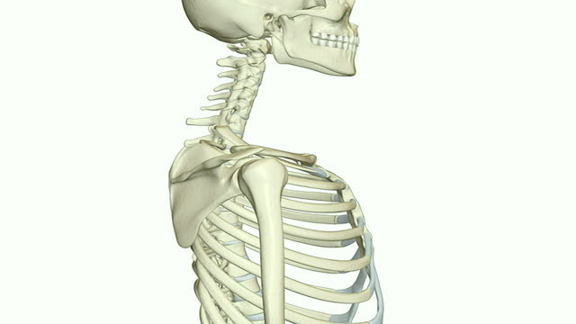 the cervical vertebrae - cervical vertebrae stock videos & royalty-free footage