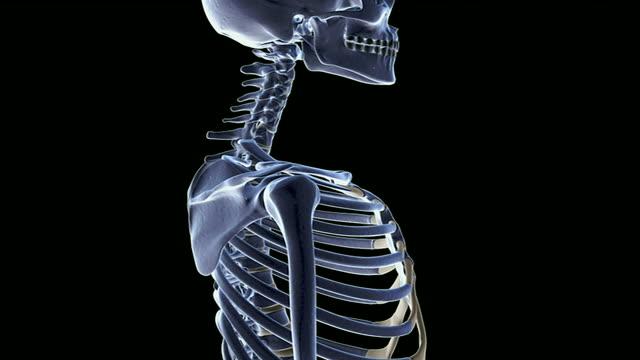 the cervical vertebrae - cervical vertebrae stock videos & royalty-free footage