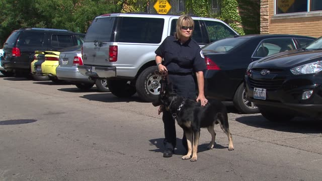 vídeos de stock, filmes e b-roll de the chicago police canine unit held a fundraiser to buy bulletproof vests for their k9 companions female police officer with canine on september 14... - à prova de balas